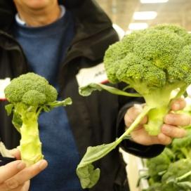 De har stor broccoli på Stockmans i Helsingfors.