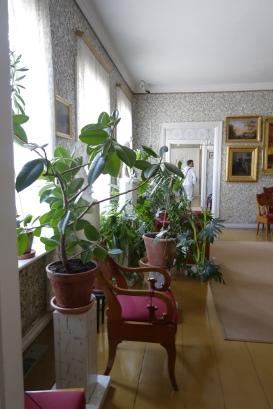 Fikus och andra krukväxter hemma hos paret Runeberg.