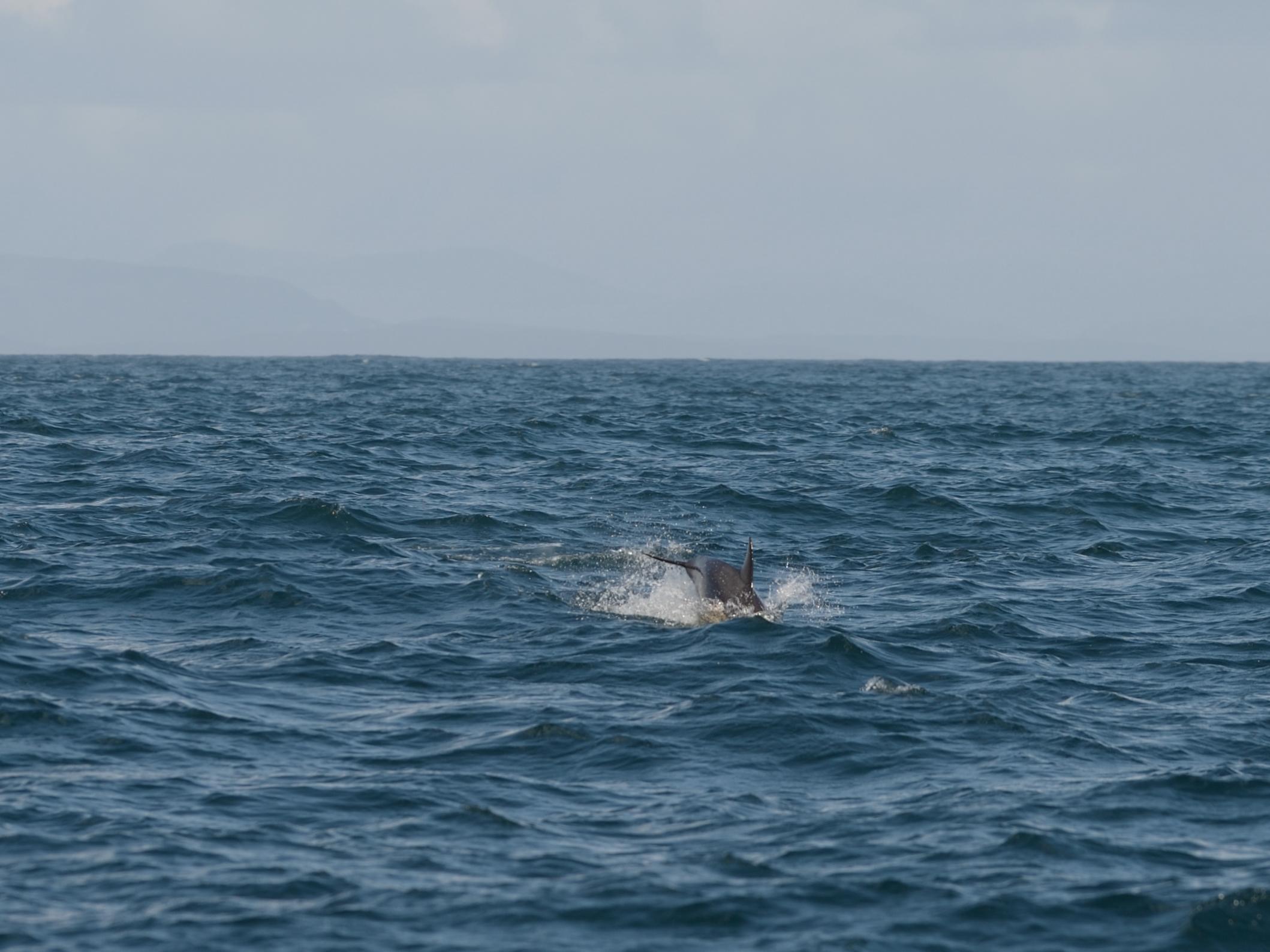 skye dolphin