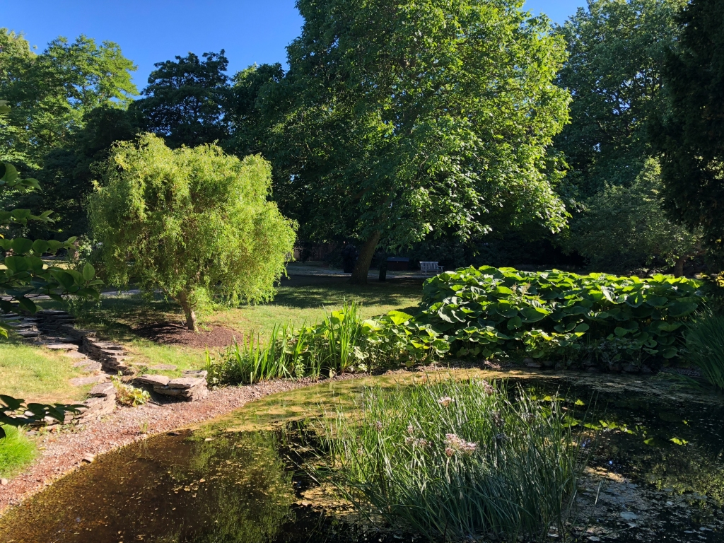En damm omgiven av träd och gröna växter i De badande vännernas trädgård i Visby.