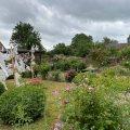 rosenrädgårdIMG_2567